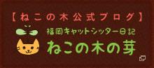 【ねこの木公式ブログ】福岡キャットシッター日記 ねこの木の芽